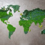 Lichenii stabilizati, naturama Lichenii stabilizati, pret Lichenii stabilizati,, decoratiuni Lichenii stabilizati, naturama detalii, contact naturama Lichenii stabilizati,